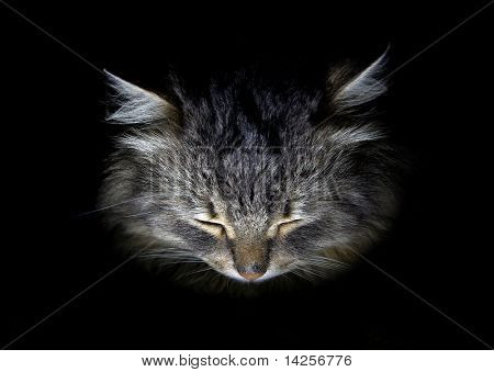 Portrait of cat on a black background