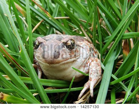 A Toad Sitting On The Wet Grass