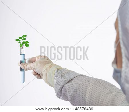 outstretched hand in a glove holding a sprout in a test tube