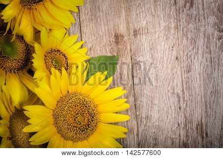 the sunflowers on wooden background close up