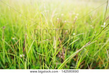 The green grass lit with the sun. A close up small depth of sharpness focus on blades in the center of the lower part of a shot