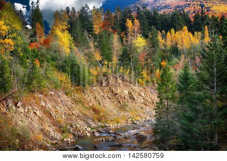 mountain river canyon in autumn time. Rocky shore. Colourfull forest