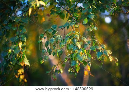 Photo sheet at sunset close up in warm colours macro bokeh Close up Leaf Backlit Silhouette Sun rays light between branches