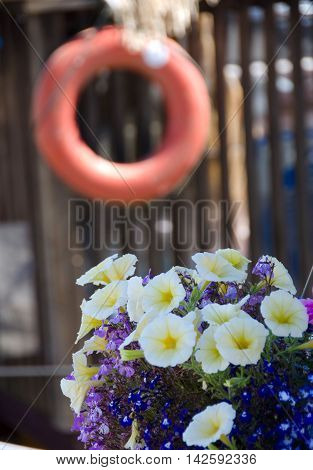 Petunias And  Life-buoy In Float Home Village, Victoria