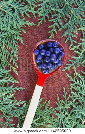 Green fluffy thuja branches and wooden spoon of blueberries on brown knitted cloth. Christmas background card top view. Bright autumn colorful background