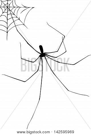 Spider and web stylized illustration vector icon