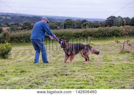 Man Playing Tug Of War With His Dog Outside On The Grass