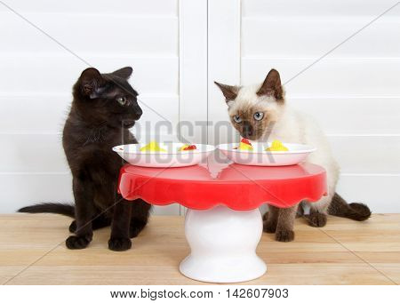 Black kitten green eyes sitting next to siamese kitten blue eyes at miniature red and white table wood floor with shutters in background. Plates with mini rubber chickens for dinner. smelling food