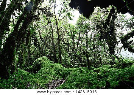 Sphagnum moss in Ang Ka Nature Trail Doi Inthanon Chiangmai Thailand