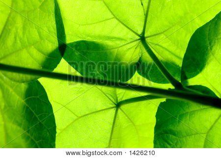 Bajo las hojas