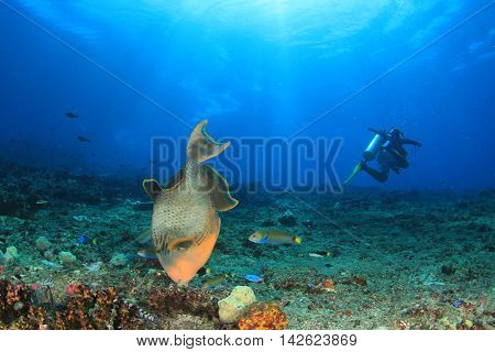 Scuba dive with triggerfish