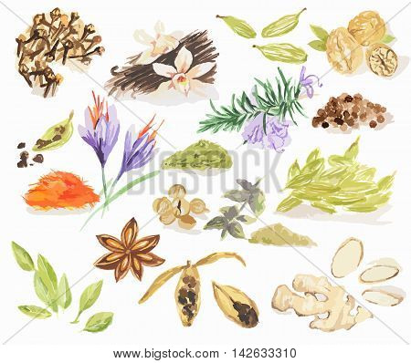 Watercolor spices set. All types of spices as cinnamon, anise, nutmeg, vanilla and more.
