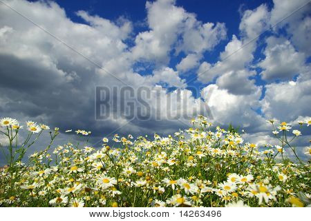 flowers on cloudy sky