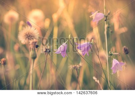 Summer Flowering Meadow Dreamy Feeling