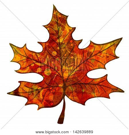 Bright red maple leaf with veins like watercolor on a white background. Vector illustration.