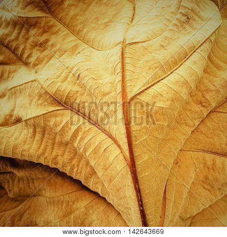 Colorfull A Dry Teak Leaf Texture Dead Leaf background Nature Degign.