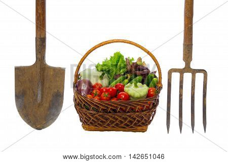 basket with vegetables and garden tools on white