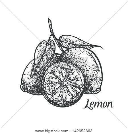 Decorative lemon monochrome vector illustration. Decorative lemon in old style for the design tee, juice labels , cards and menu