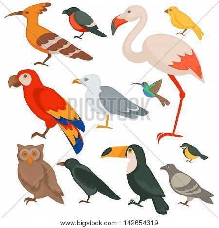 Colorful birds set: parrot, flamingo and bullfinch, robin and toucan. Flat design. Animal wildlife vector illustration isolated on white