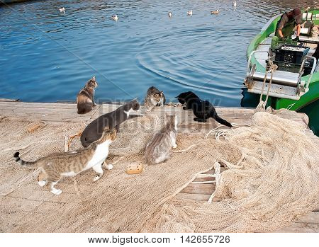 Fishermen are working on the boat. Group of cats waiting for catch