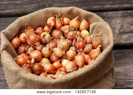 Large group of onion seeds in closeup