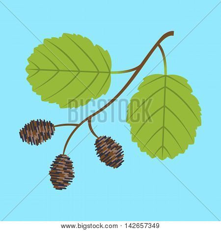 Alder twig with branch leaves and cones. Colorful vector flat illustration.
