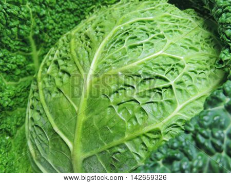 fresh, raw savoy cabbage, close-up shot, healthy eating.