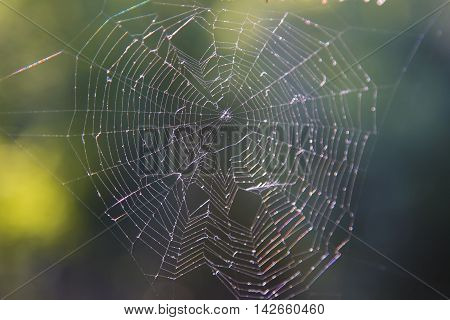 Macro shot of big spider web covered with drops