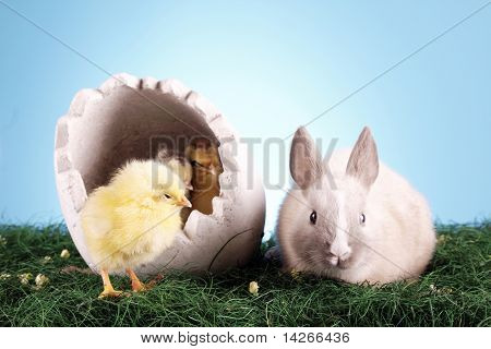 Easter animals concept!