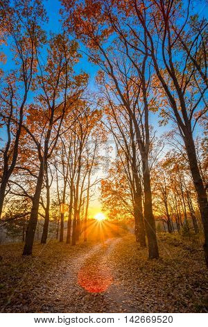 Winding Countryside Road Path Walkway Through Autumn Forest. Sunset Sunrise. Nobody. Road Turns To Rising Sun. Lens Flare