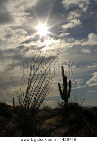 Saguaro Silhouette Landscape