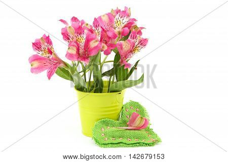 Pink lily flowers in a bucket and cushion-heart isolated on white background.