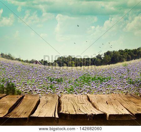 Spring tree background. Grass and cloudscape art Design. Summer environmetal landscape.Flowers