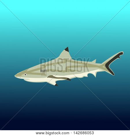 Great white shark sign logo on a blue background