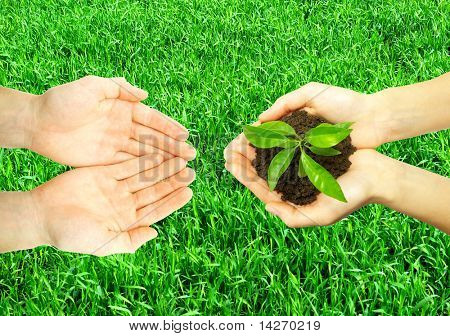 Hands holding sapling in soil  on grass texture