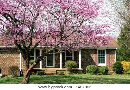 Red Bud Red House
