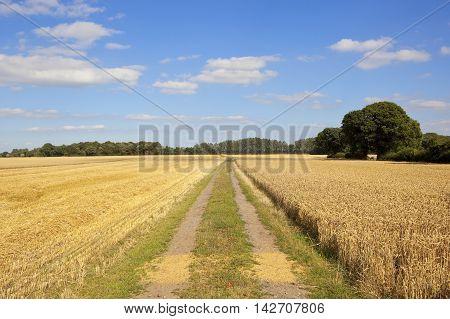 Farm Track In Summer