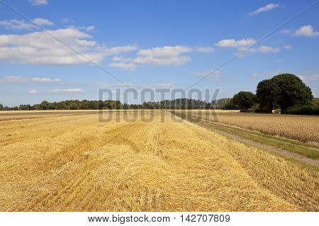 Harvested Fields In Yorkshire
