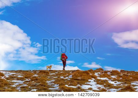 Man Hiker with Backpack red Jacket walking up small Dog following him approach Peak Top with Grass and some snow blue Sky Clouds shining Sun