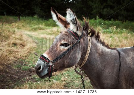 portrait of the donkey in the nature