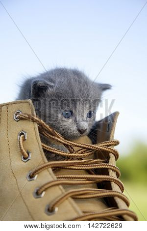 kitten with a smoky color and blue eyes in the boot, in the nature on the background of summer green