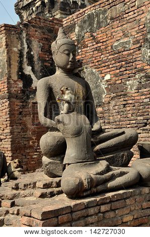 Lopburi Thailand - December 29 2013: Monkey eating corn while sitting on a Buddha statue in the ruins of historic Khmer Wat Phra Prang Sam Yot