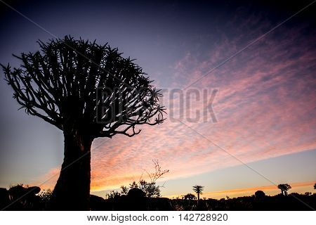 Kwiver Tree Silhouette