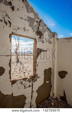 Dead Tree Through Broken Window