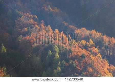 Coniferous and deciduous mountain forest in autumn colors in a mountainous area. Seasons changing unique sunlight concept textured background.