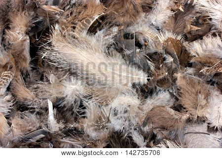 Feathers background. Clean chicken feathers, white gray brown feathers