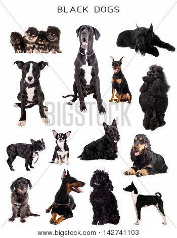 Black dogs set isolated on white background