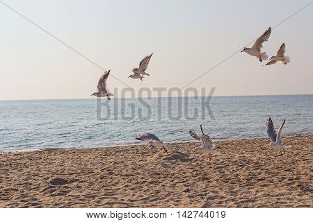 Flock of seagulls hovering in the confusion over the beach. Animals