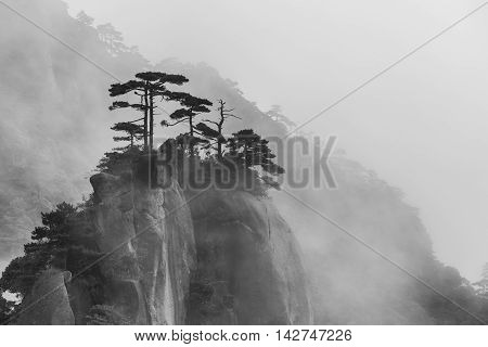 Single trees on foggy san qing Mountain in Wuyuan China black and white