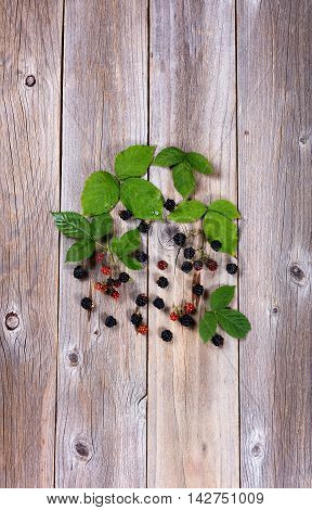 Overhead view of wild blackberries and leafs on rustic wooden boards in vertical format.